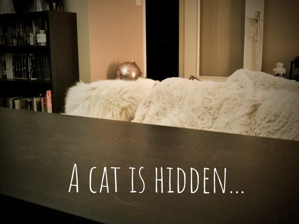 Une photo avec un chat caché