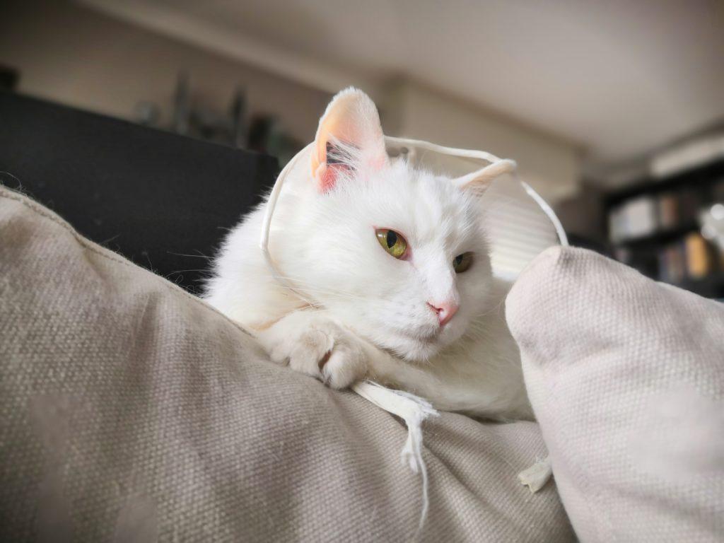 Photo du chat